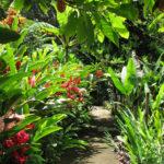 Ecomusee Guadeloupe