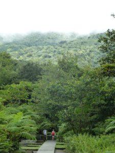 La forêt embrumée