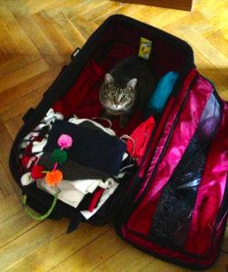 Mettez un chat dans votre valise